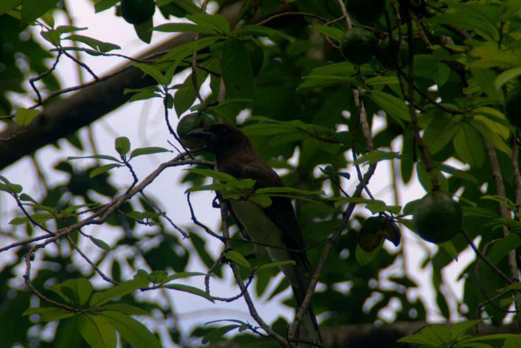 Yaxha - Bird