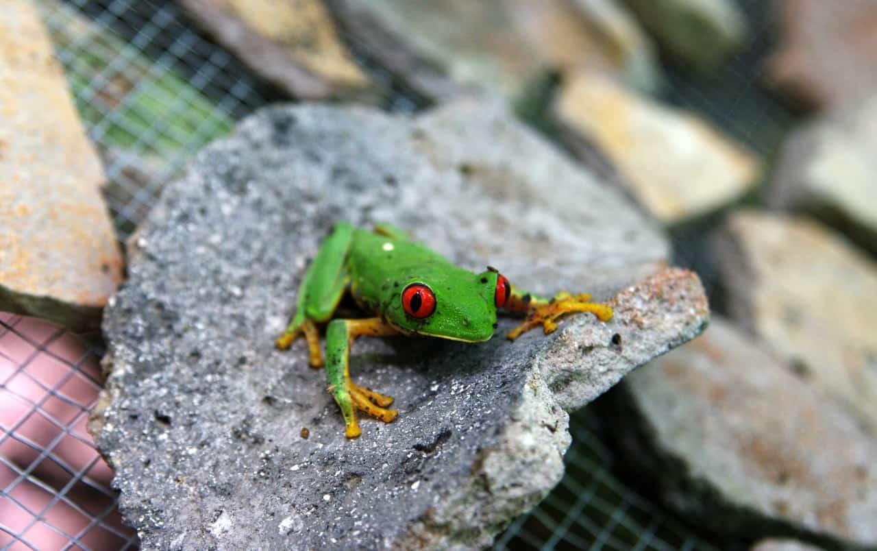 Amazing Temples and Pyramids - A frog - El Mirador