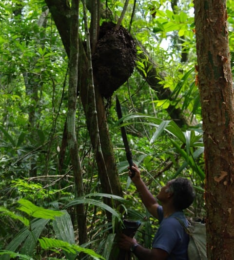 El Mirador Hike - The Guide - Examining a beehive