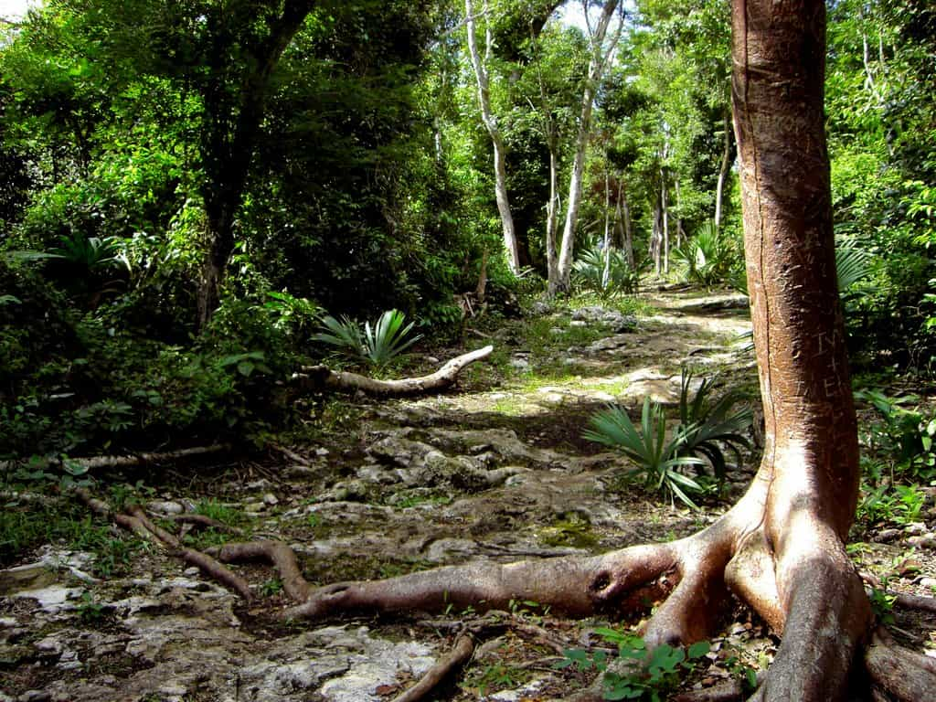 The path - San Gervasio - Cozumel