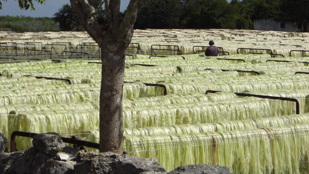 Sisalproduktion in Yucatan