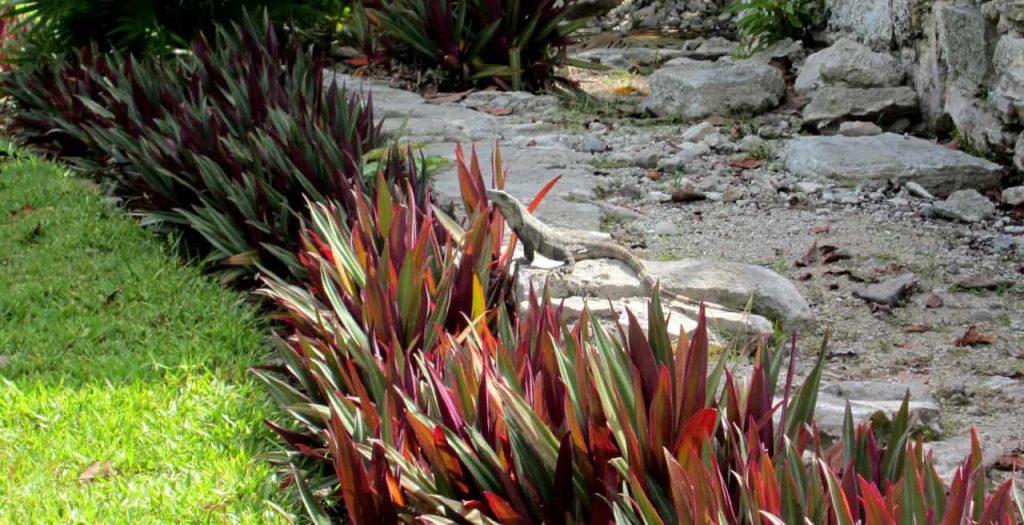 Plants and Iguana