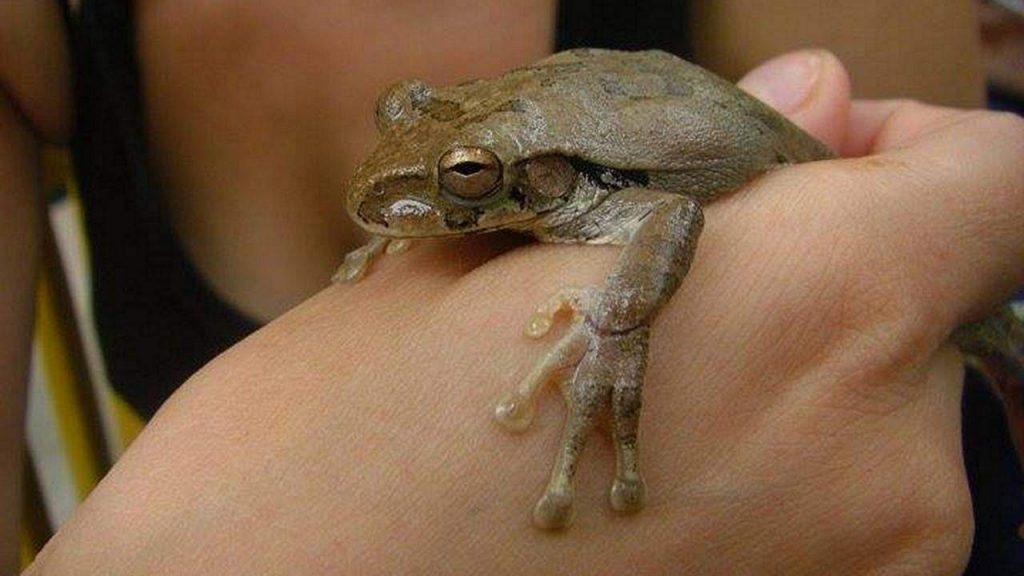 Anna und der Frosch