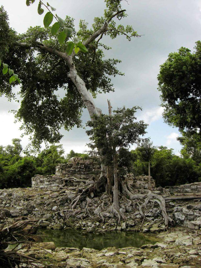 Baum, Wasser und Ruinen in San Gervasio auf Cozumel