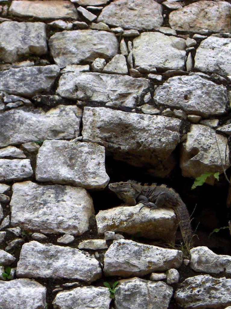 Leguan in den Ruinen von Chichén Itzá