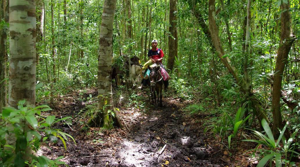 El Mirador - Mula on the Path