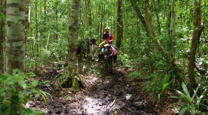 El Mirador – Ein Dschungelabenteuer in Guatemala