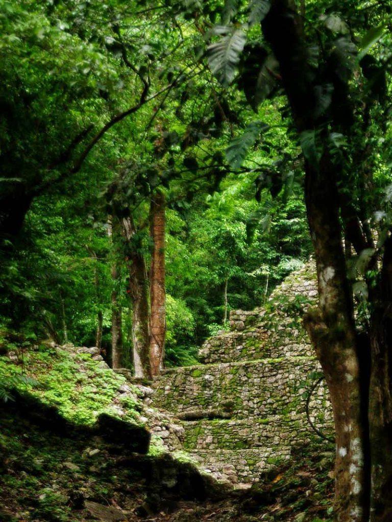 Yaxchilan - Blick durch den Wald auf Mauerreste
