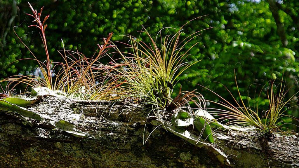 Yaxhá - Tree trunk with epiphytes